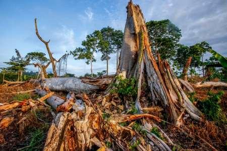 Mars, Nestlé & Mondelez are driving deforestation on a devastating scale in West Africa