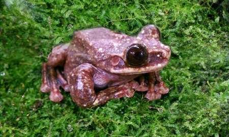 Frog goes extinct, media yawns. www.businessmanagement.news