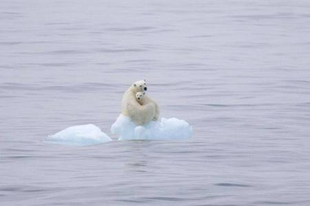 According to a terrifying climate report from 15,000 scientists: We're Now Even Closer to the Point of No Return