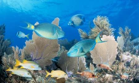 How did half of the great Florida coral reef system disappear? www.businessmanagement.news