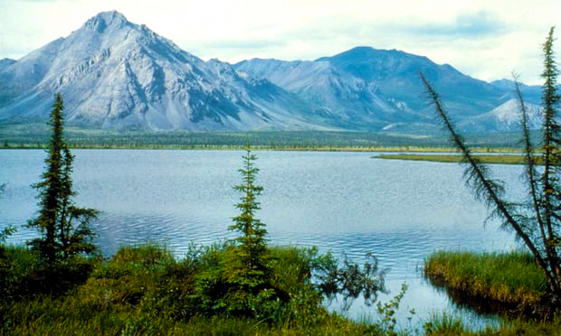 Part of the Arctic National Wildlife Refuge, the largest US wilderness, risks being transferred to the hands of the fossil fuel industry. www.businessmanagement.news