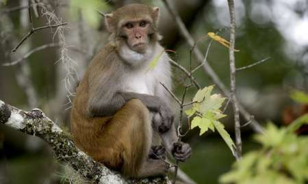 "Monkey Excrement at root of ""New Plague"" www.businessmanagement.news"