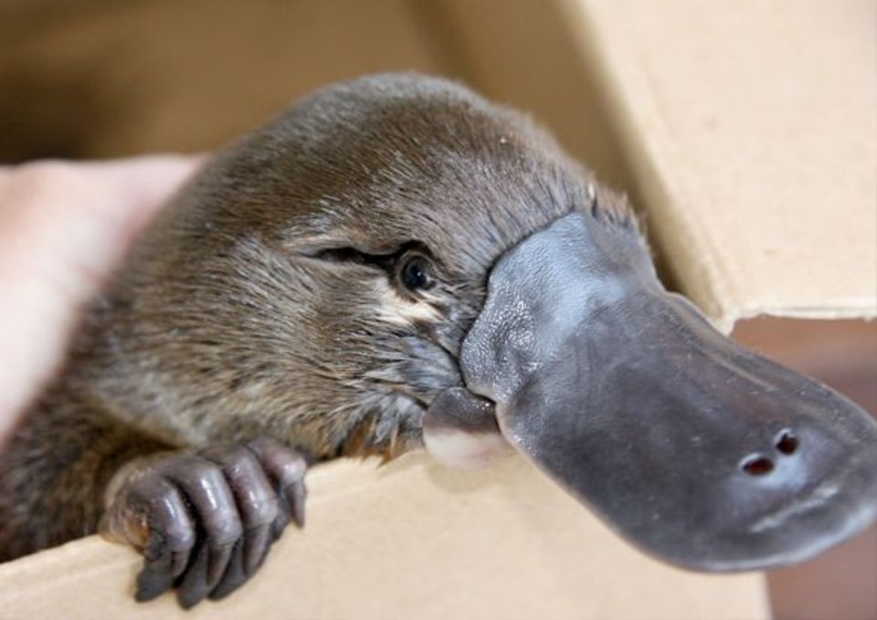 Saving Lives with Platypus Milk. www.businessmanagement.news
