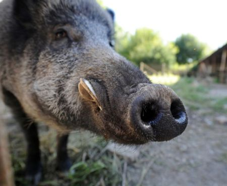 Wild Boars in Italy Destroy Hidden Stash of Cocaine. www.businessmanagement.news