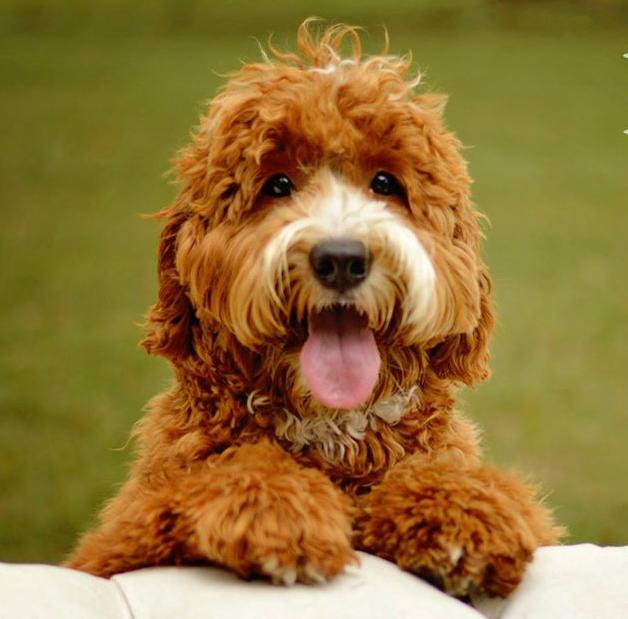 We Wish This Was A Joke: Trump Hired a Dog Breeder to Run Coronavirus Task Force. www.businessmanagement.news