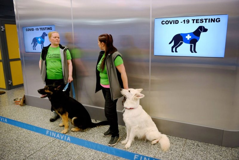 scientists are hoping that dogs' keen sense of smell, 10,000 times better than that of humans, can help them identify people carrying COVID-19.